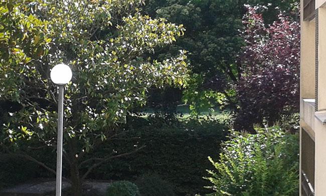 Élagage des arbustes au n° 8