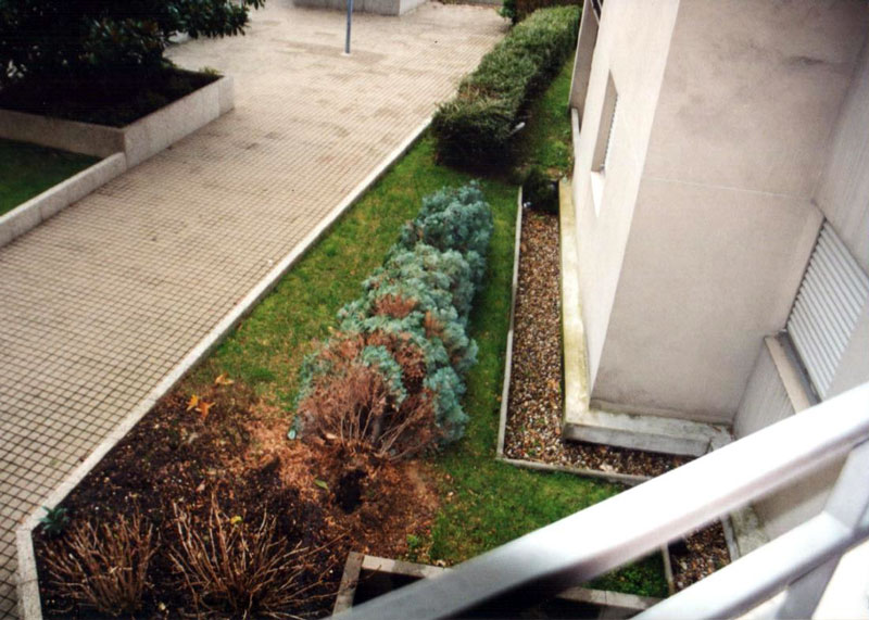 cour n° 8 av° Blum avec arbuste de 4 m de haut (2) après arrachage