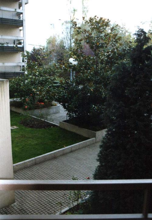 cour ncolonne6° 8 av° Blum avec arbuste de 4 m de haut (4) avant arrachage